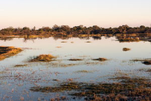 infomap_namibia_botswana_2016_moremi_swamp