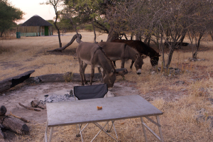 infomap_namibia_botswana_2016_tsodilo_camp2